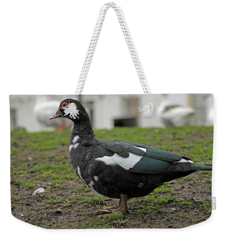 Muscovy Duck Weekender Tote Bag featuring the photograph Female Muscovy Duck by Tony Murtagh