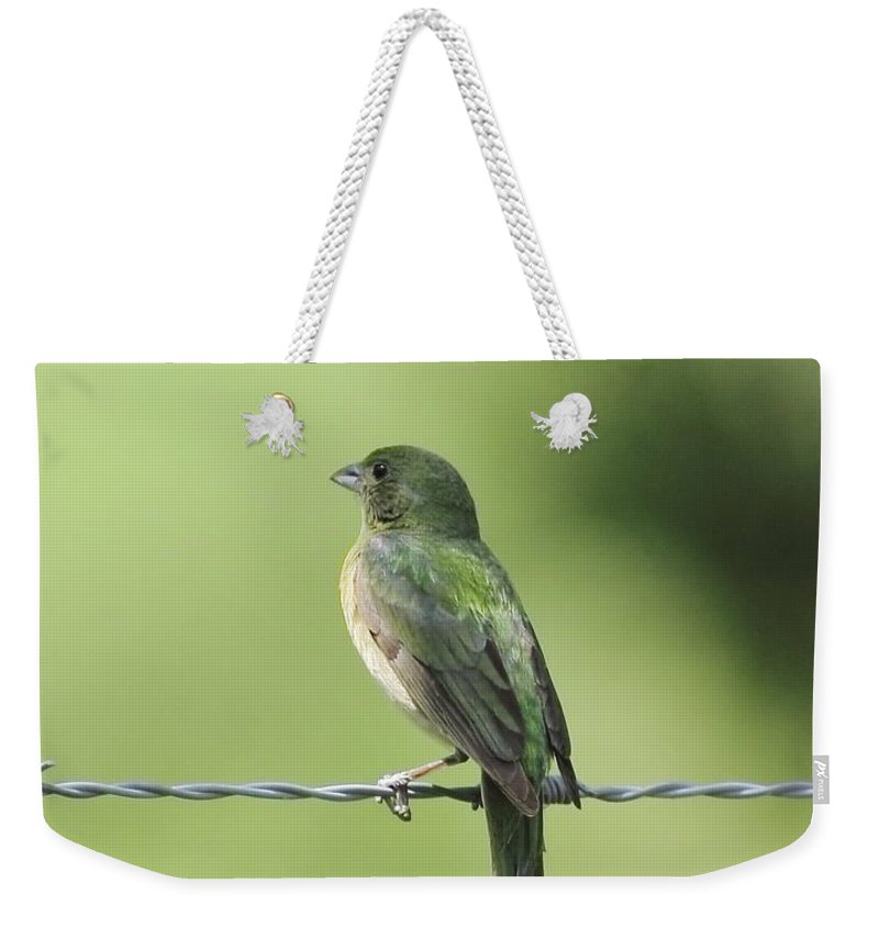 Animal Weekender Tote Bag featuring the photograph Female Painted Bunting by Robert Frederick