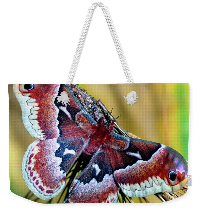 Promethea Moth Weekender Tote Bag featuring the photograph Female Promethea Moth by Millard H. Sharp