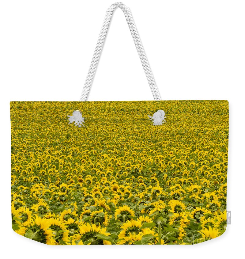 Agricultural Weekender Tote Bag featuring the photograph Field Of Blooming Yellow Sunflowers To Horizon by Stephan Pietzko