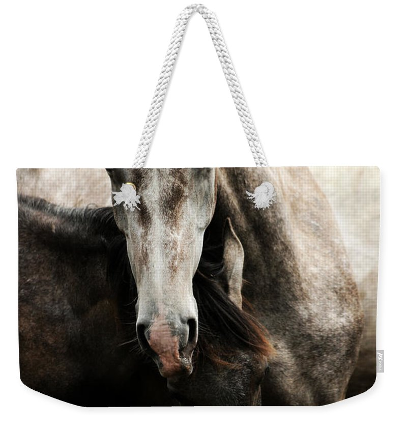 Horse Weekender Tote Bag featuring the photograph Fighting by Angel Ciesniarska