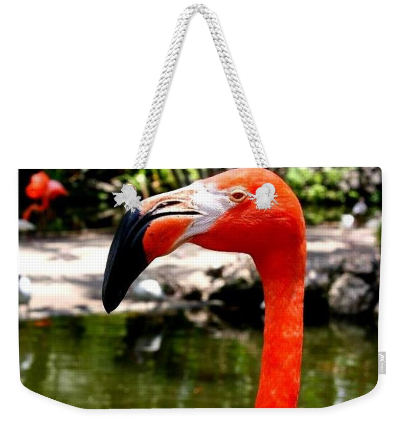 Florida Pink Flamingo - Florida - Flamingos - Nature Weekender Tote Bag featuring the photograph Florida Pink Flamingo by Dora Sofia Caputo Photographic Design and Fine Art