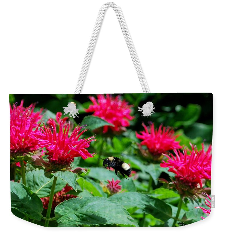 Bee Weekender Tote Bag featuring the photograph Flying Bee With Bee Balm Flowers by Nancy Mueller
