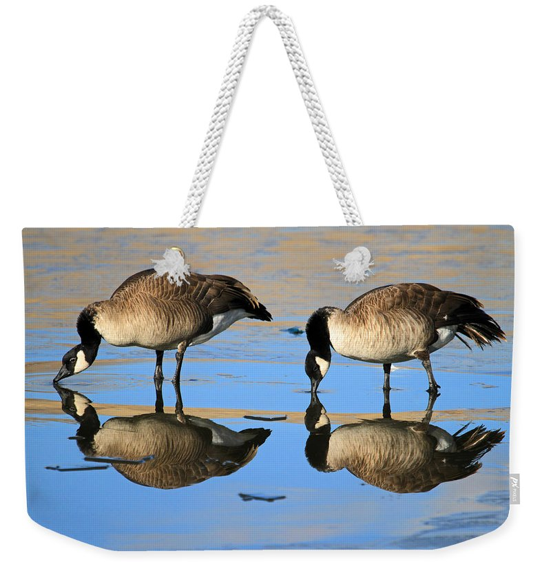 Canada Goose Weekender Tote Bag featuring the photograph Four's A Crowd by Donna Kennedy