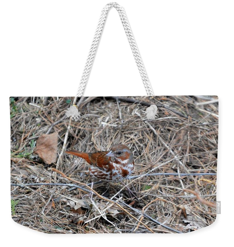 Fox Sparrow Weekender Tote Bag featuring the photograph Fox Sparrow by Thomas Phillips