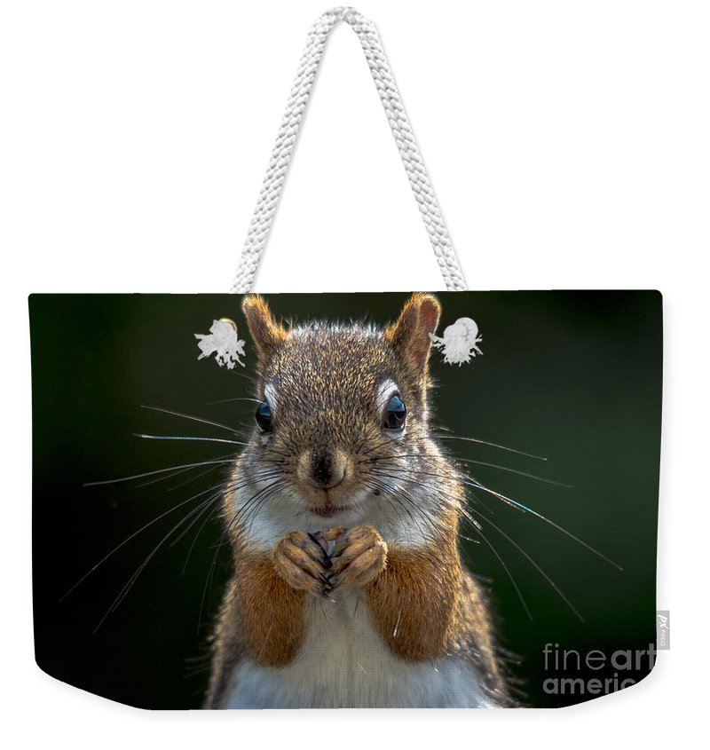 Cheryl Baxter Photography Weekender Tote Bag featuring the photograph Furry Friend by Cheryl Baxter