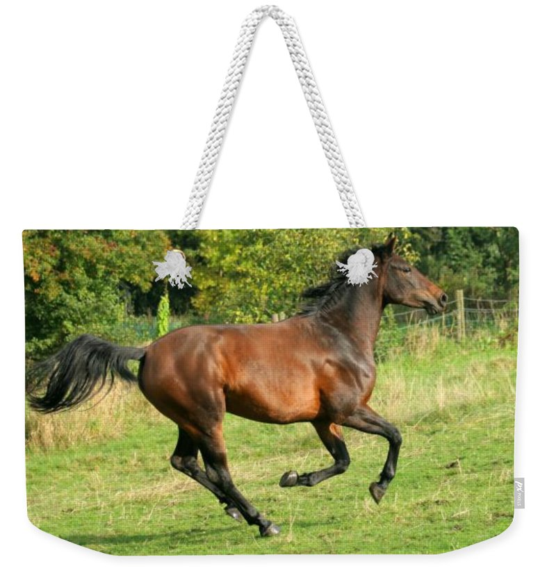 Horse Weekender Tote Bag featuring the photograph Gallop by Angel Ciesniarska