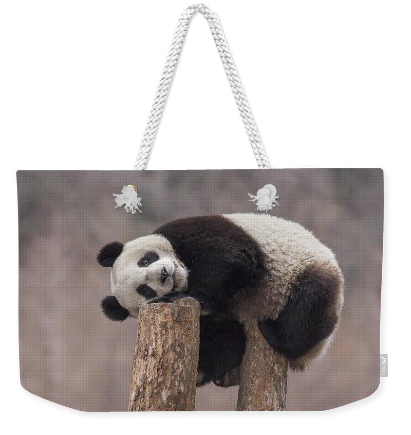 Bear Cub Photographs Weekender Tote Bags