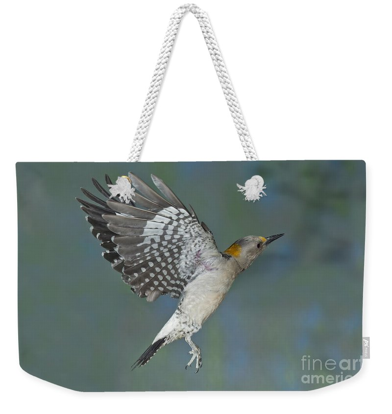 Golden-fronted Woodpecker Weekender Tote Bag featuring the photograph Golden-fronted Woodpecker by Anthony Mercieca