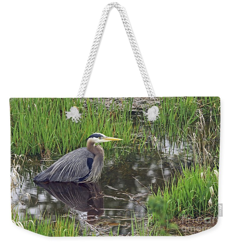Heron Weekender Tote Bag featuring the photograph Great Blue Heron At Deboville Slough 2 by Sharon Talson