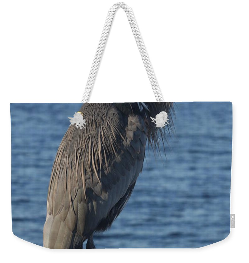 Heron Weekender Tote Bag featuring the photograph Great Blue Heron by Christiane Schulze Art And Photography