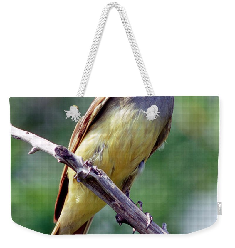 Animal Weekender Tote Bag featuring the photograph Great Crested Flycatcher With Captured by Millard H. Sharp