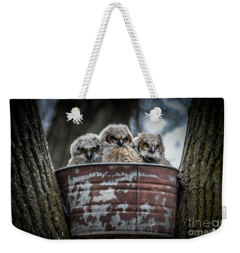 Owls Weekender Tote Bag featuring the photograph Great Horned Owl Chicks by Ronald Grogan