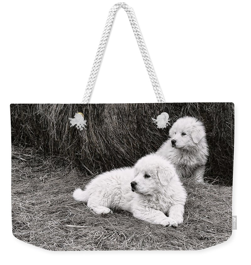 Puppys Weekender Tote Bag featuring the photograph Great Pyramise Pups by Bonnie Willis