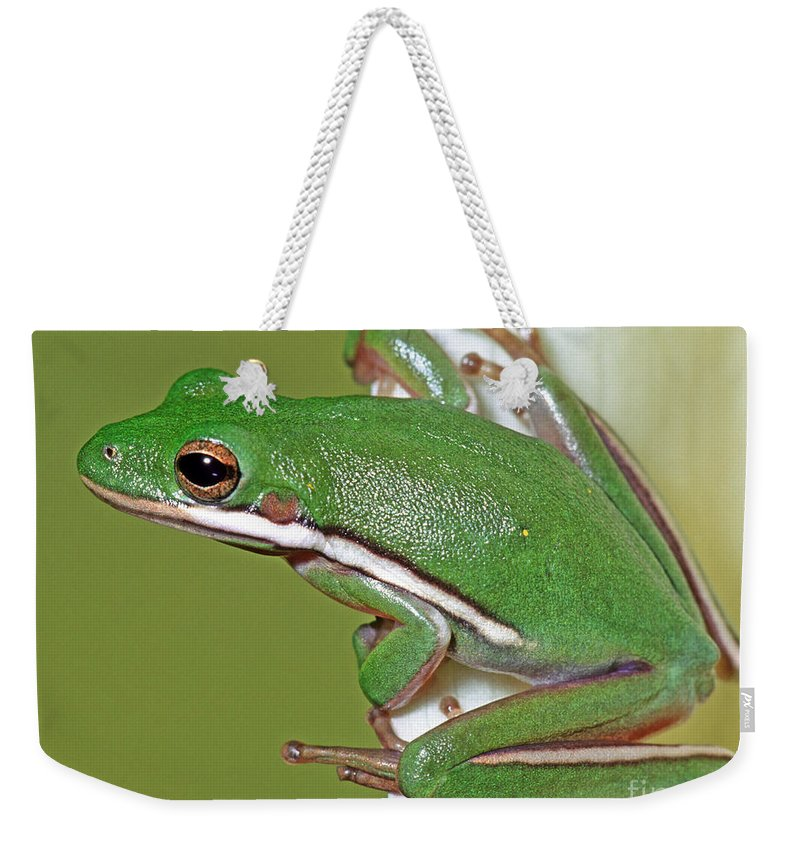 Green Tree Frog Weekender Tote Bag featuring the photograph Green Treefrog by Millard H Sharp