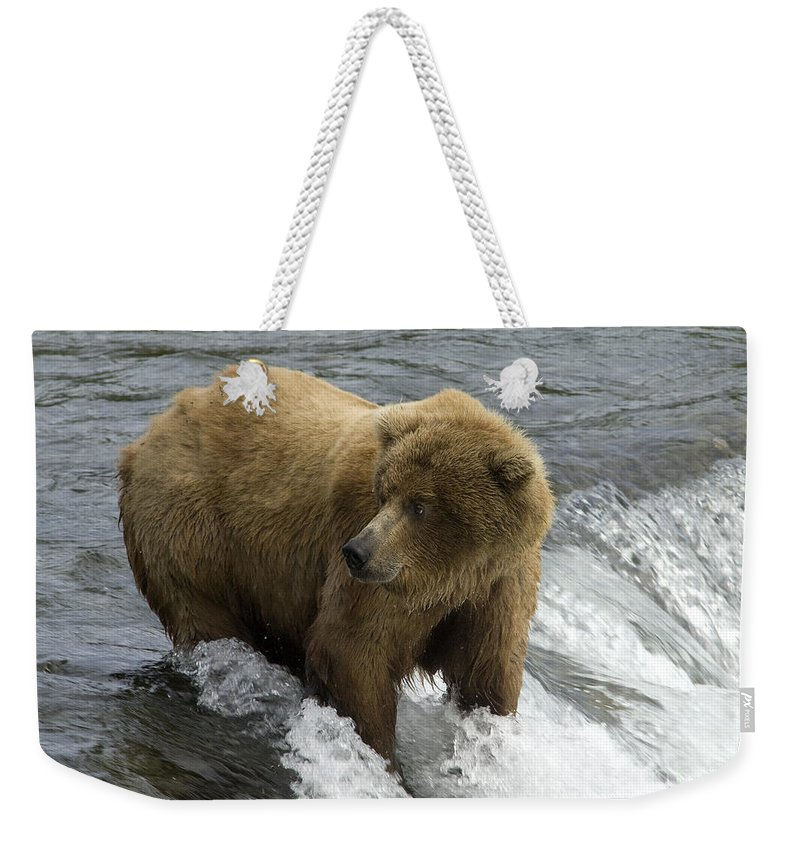 Bears Weekender Tote Bag featuring the photograph Grizzly Bear by Fitzroy Barrett