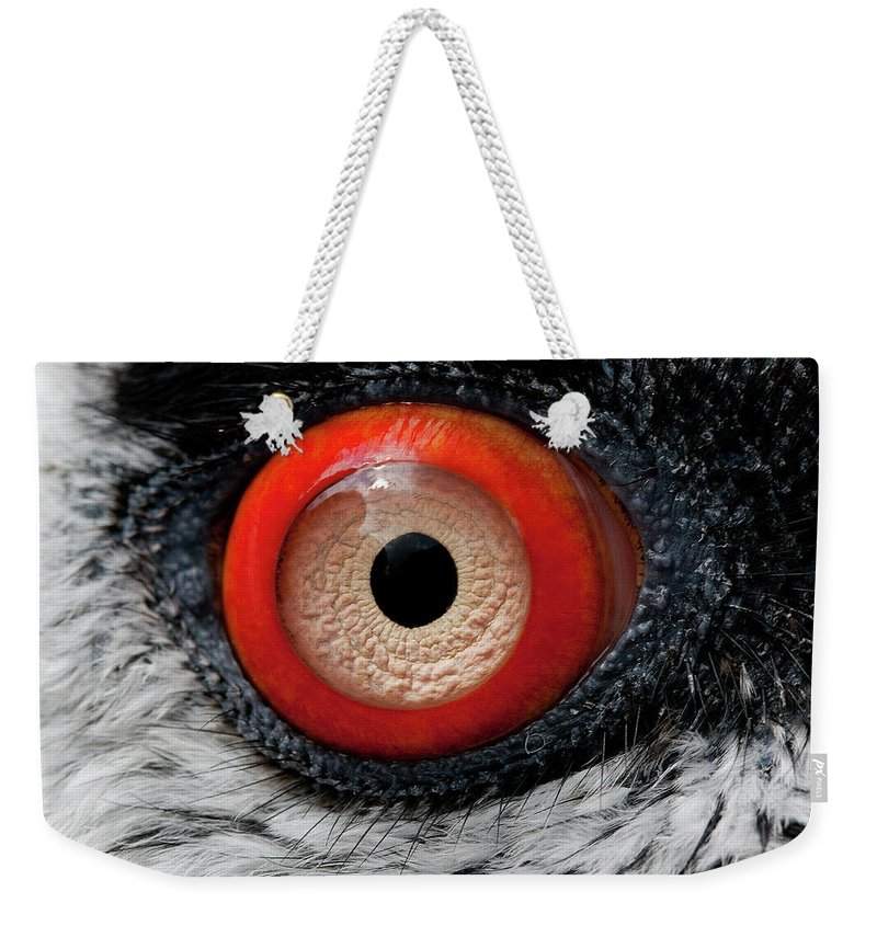 Accipitridae Weekender Tote Bag featuring the photograph Gypaete Barbu Gypaetus Barbatus by Gerard Lacz