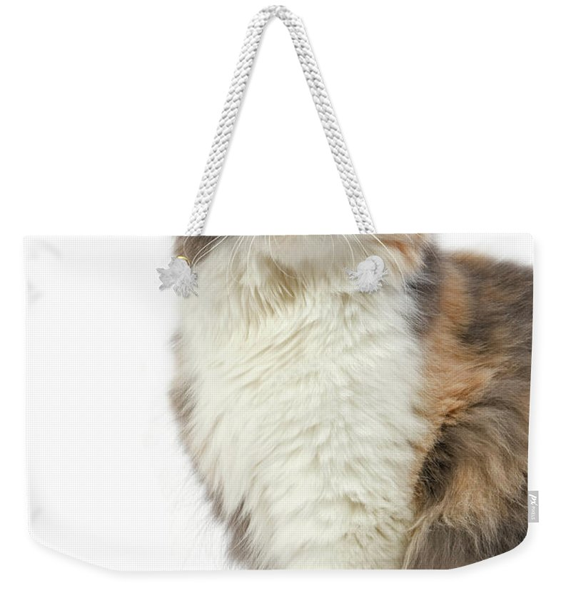 Adult Weekender Tote Bag featuring the photograph Highland Fold Bleu Creme Et Blanc by Gerard Lacz