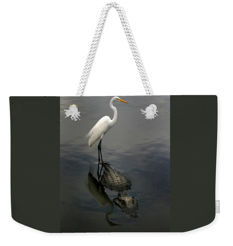 Alligator Weekender Tote Bag featuring the photograph Hitch Hiker by Anthony Jones