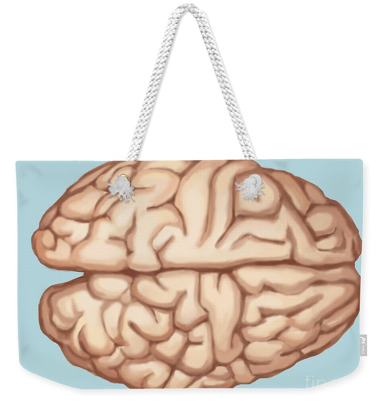 Science Weekender Tote Bag featuring the photograph Human Brain by Spencer Sutton