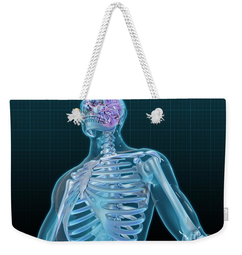 Science Weekender Tote Bag featuring the photograph Human Skeleton And Brain, Artwork by Evan Oto