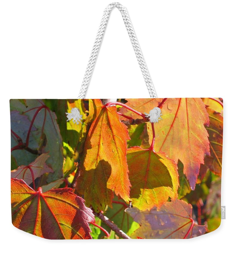 Autumn Weekender Tote Bag featuring the photograph Illumining Autumn by Ann Horn