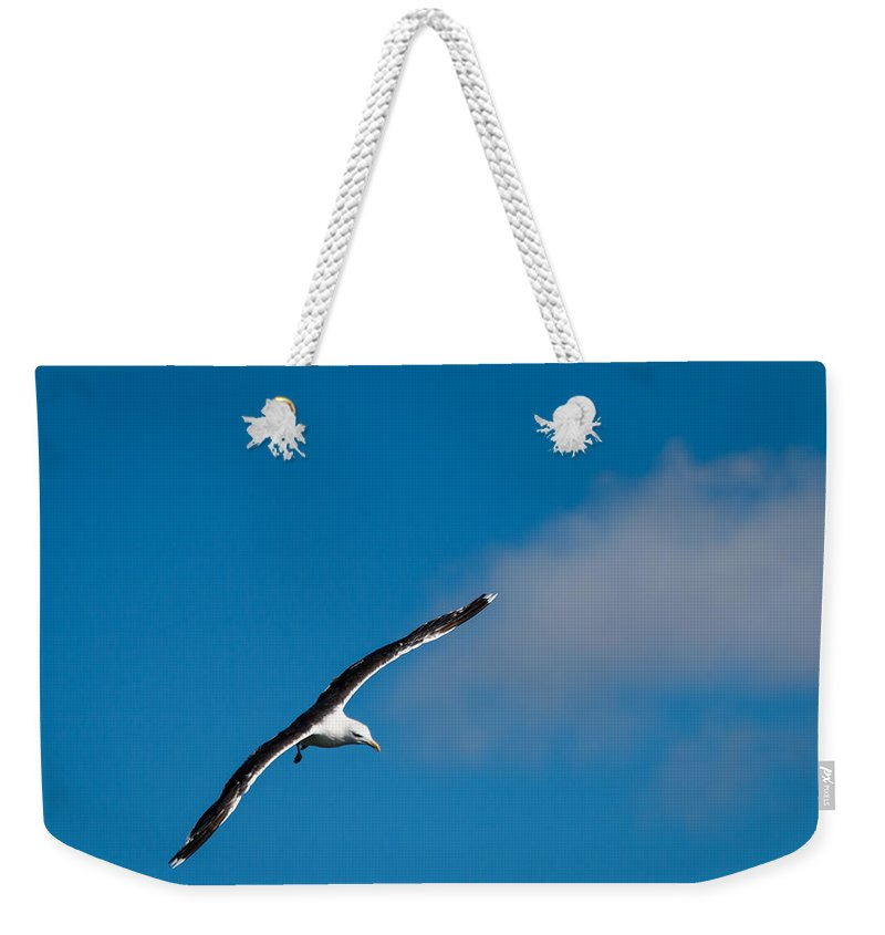 Bird Weekender Tote Bag featuring the photograph In Flight by Gaurav Singh