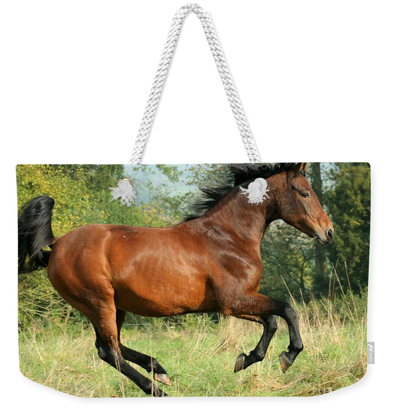 Horse Weekender Tote Bag featuring the photograph Jump Jump by Angel Ciesniarska