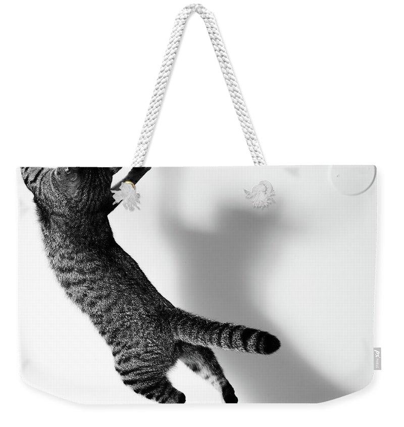 Pets Weekender Tote Bag featuring the photograph Jumping Cat by Akimasa Harada