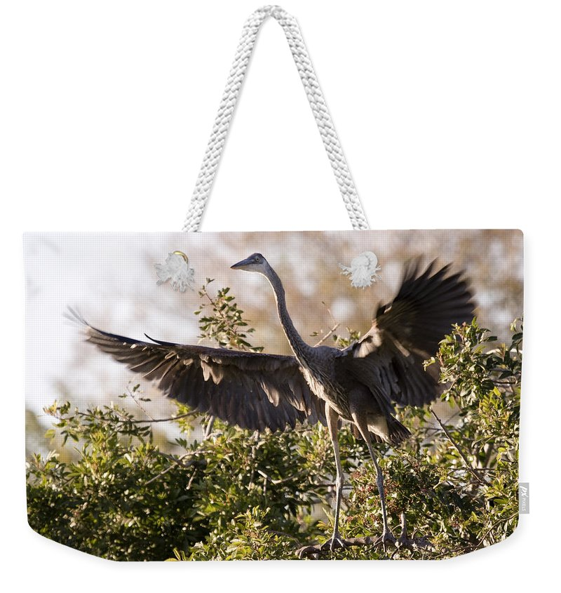 Juvenile Weekender Tote Bag featuring the photograph Juvenile Blue Heron by Sandy Swanson