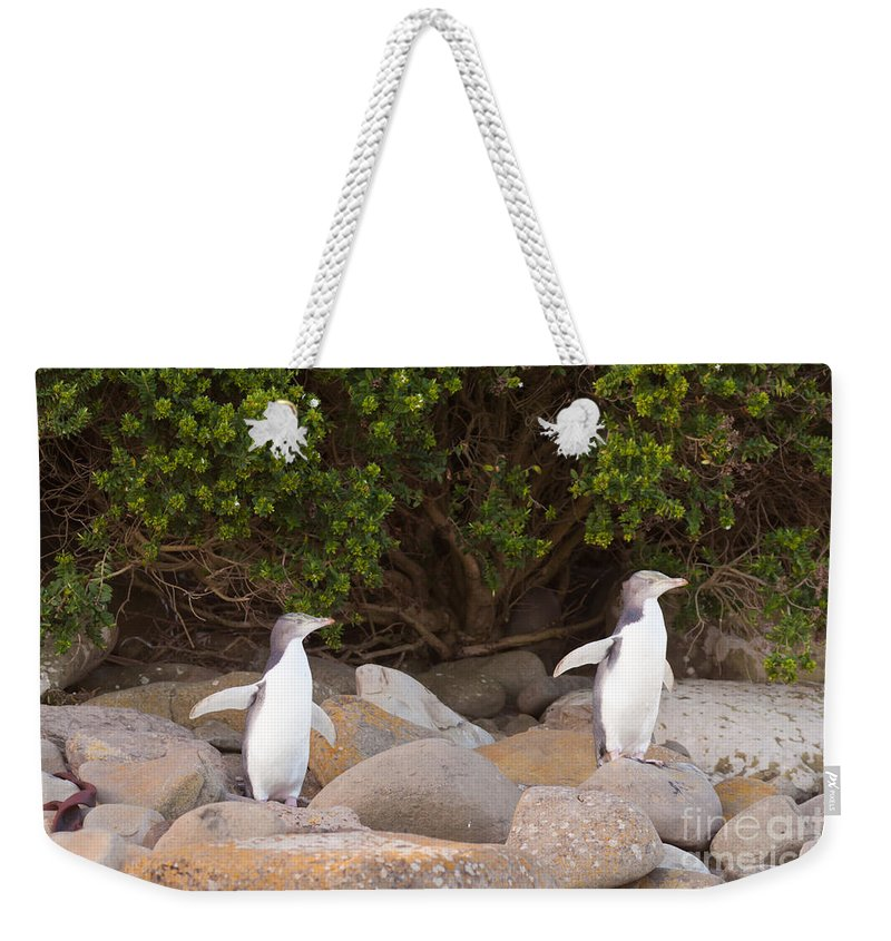 South Island Weekender Tote Bag featuring the photograph Juvenile Nz Yellow-eyed Penguins Or Hoiho On Shore by Stephan Pietzko