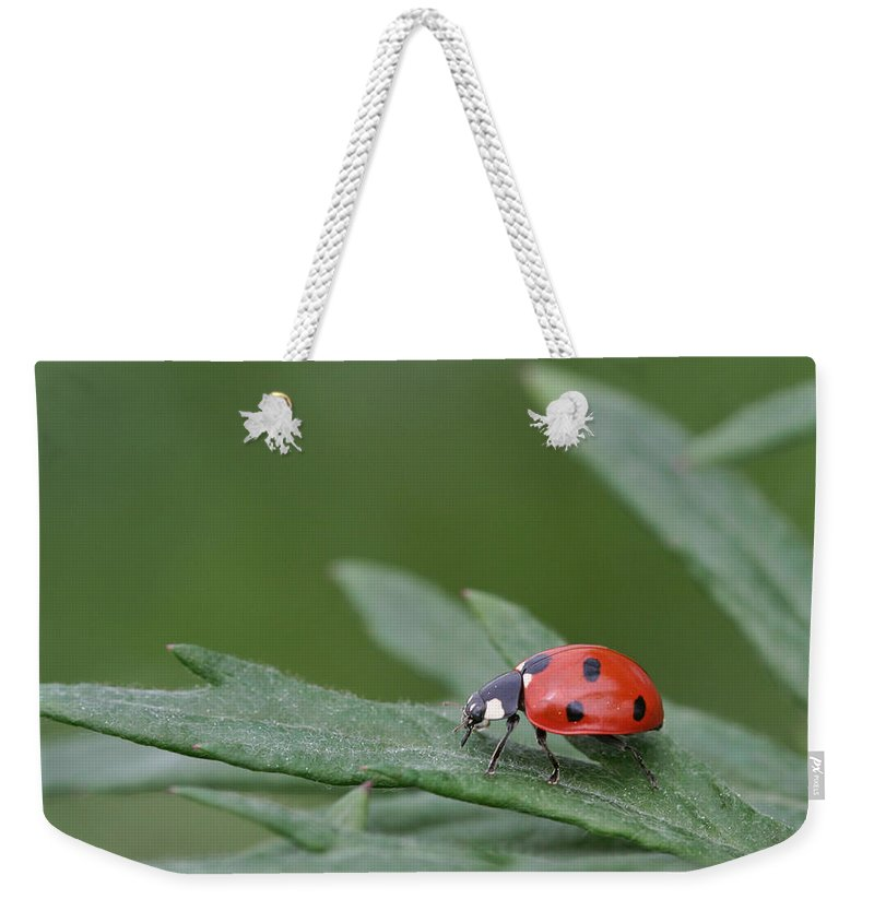 Lady Bird Weekender Tote Bag featuring the photograph Lady Bird by Dreamland Media