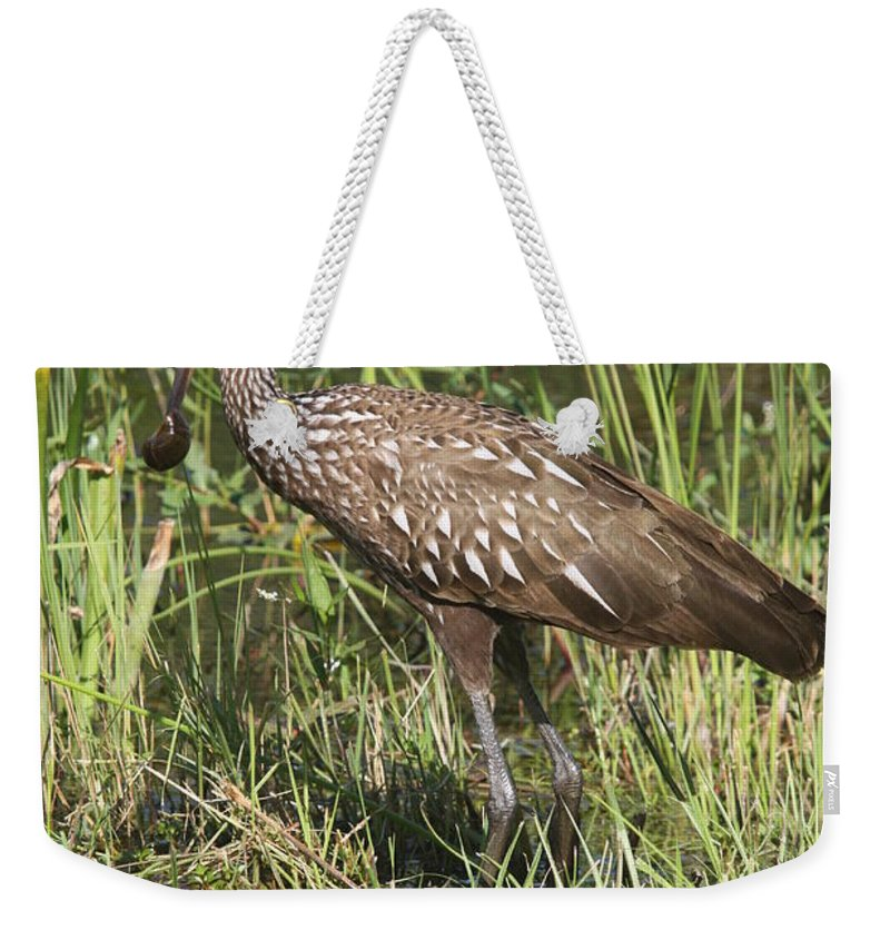 Limpkin Weekender Tote Bag featuring the photograph Limpkin In The Glades by Christiane Schulze Art And Photography