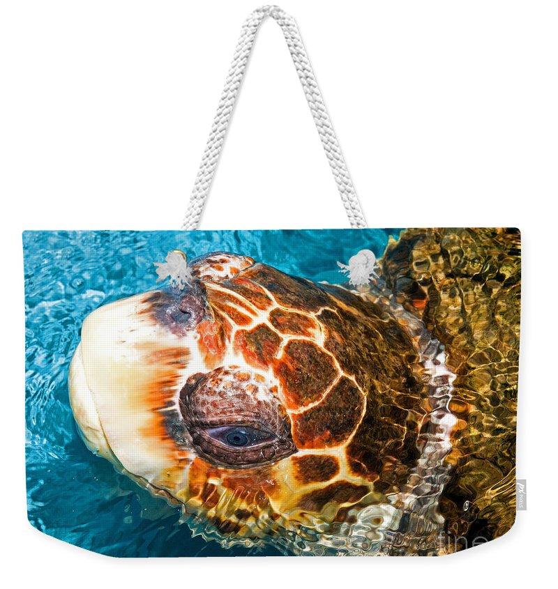 Nature Weekender Tote Bag featuring the photograph Loggerhead Sea Turtle by Millard H Sharp