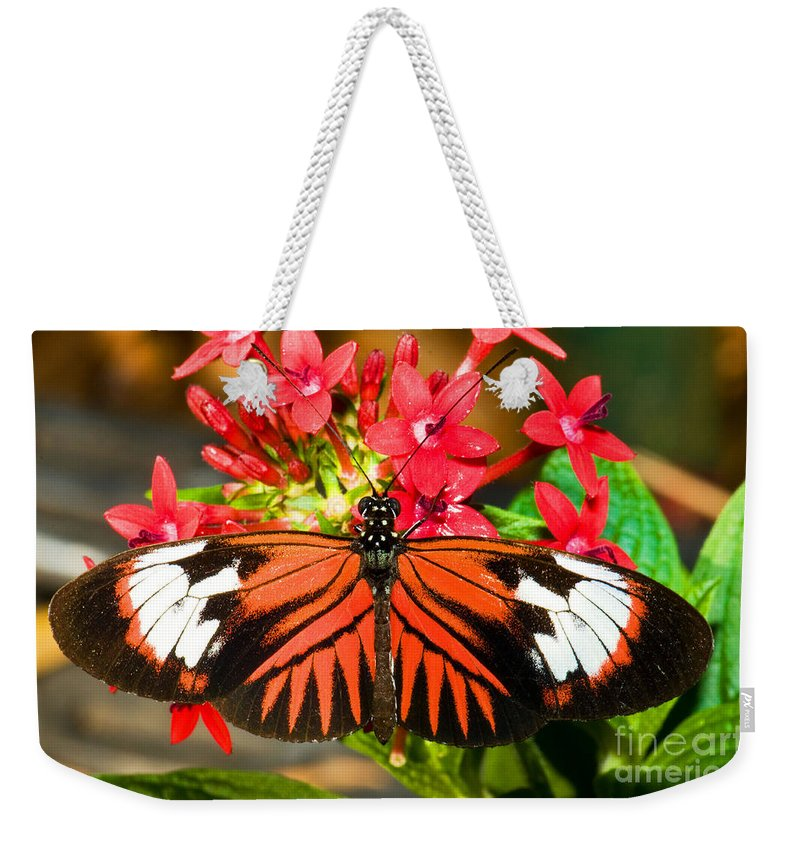 Nature Weekender Tote Bag featuring the photograph Madeira Butterfly by Millard H. Sharp