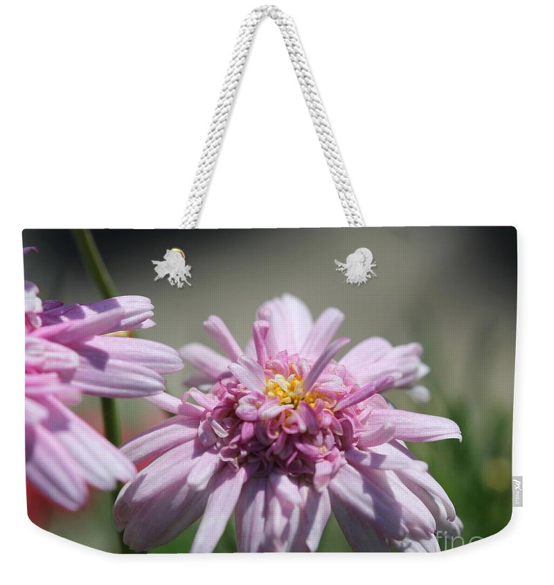 Mccombie Weekender Tote Bag featuring the photograph Marguerite Daisy Named Double Pink by J McCombie