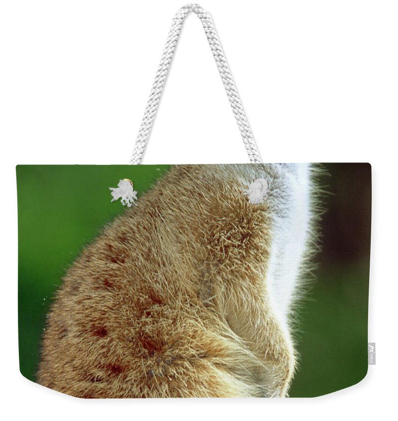 Suricata Suricatta Weekender Tote Bag featuring the photograph Meerkat by Millard H. Sharp