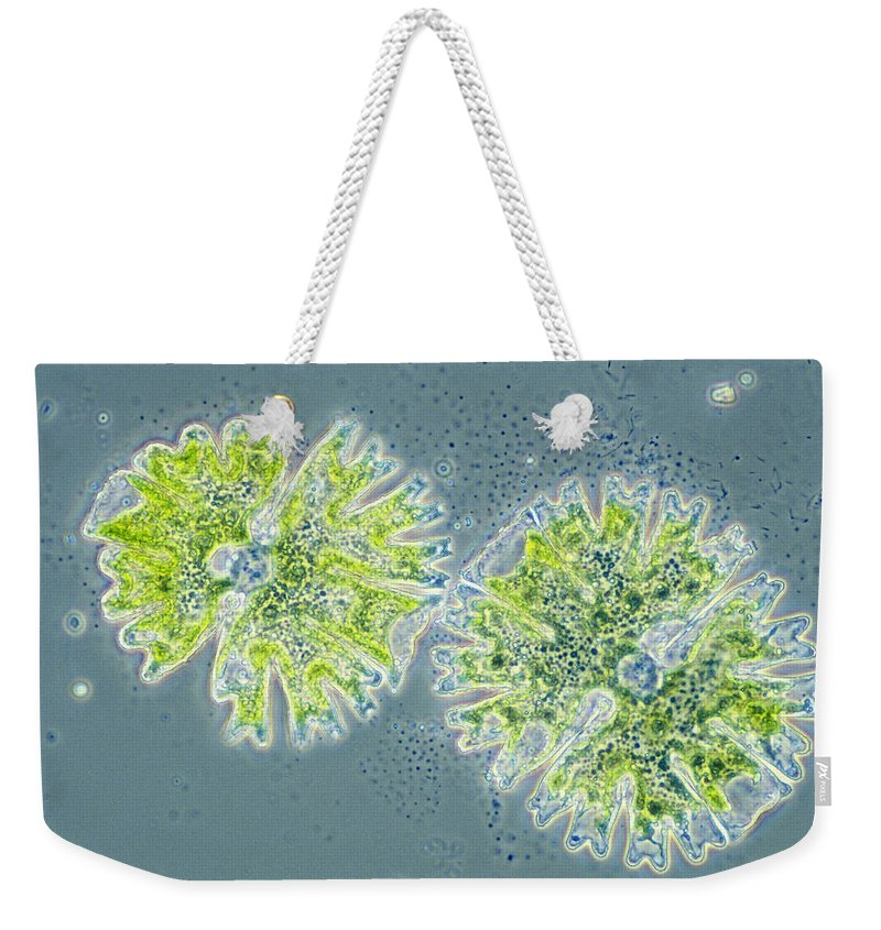 Biology Weekender Tote Bag featuring the photograph Micrasterias by Michael Abbey