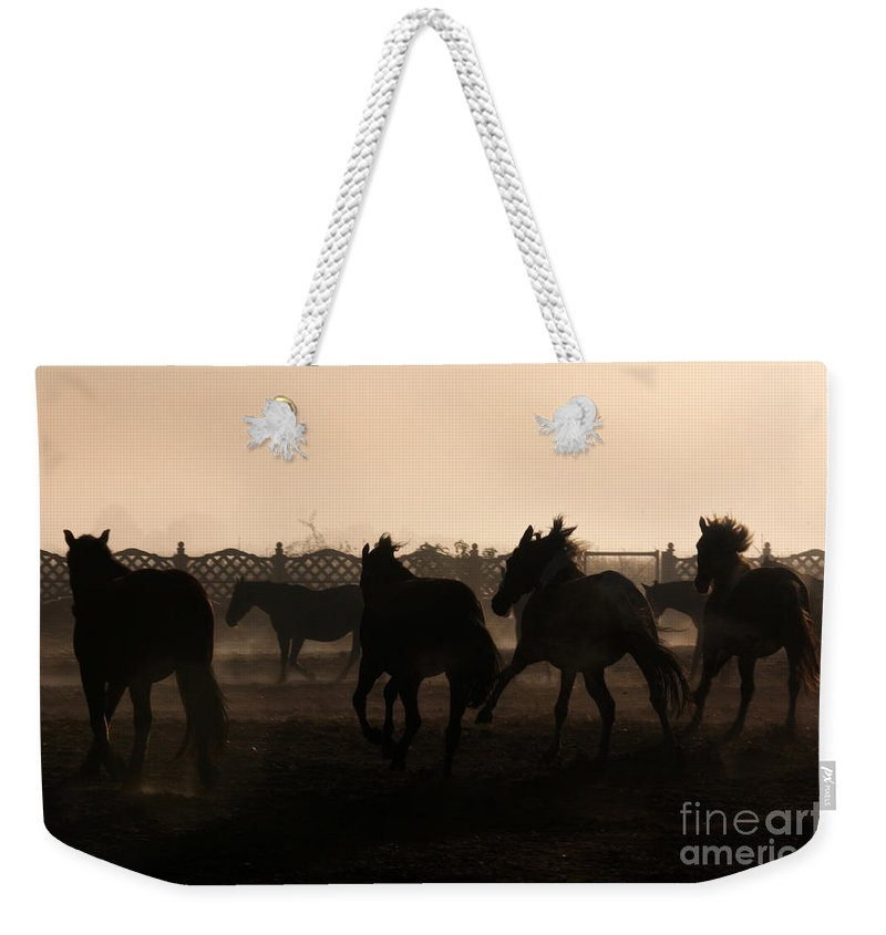 Horse Weekender Tote Bag featuring the photograph Misty Morning by Angel Ciesniarska