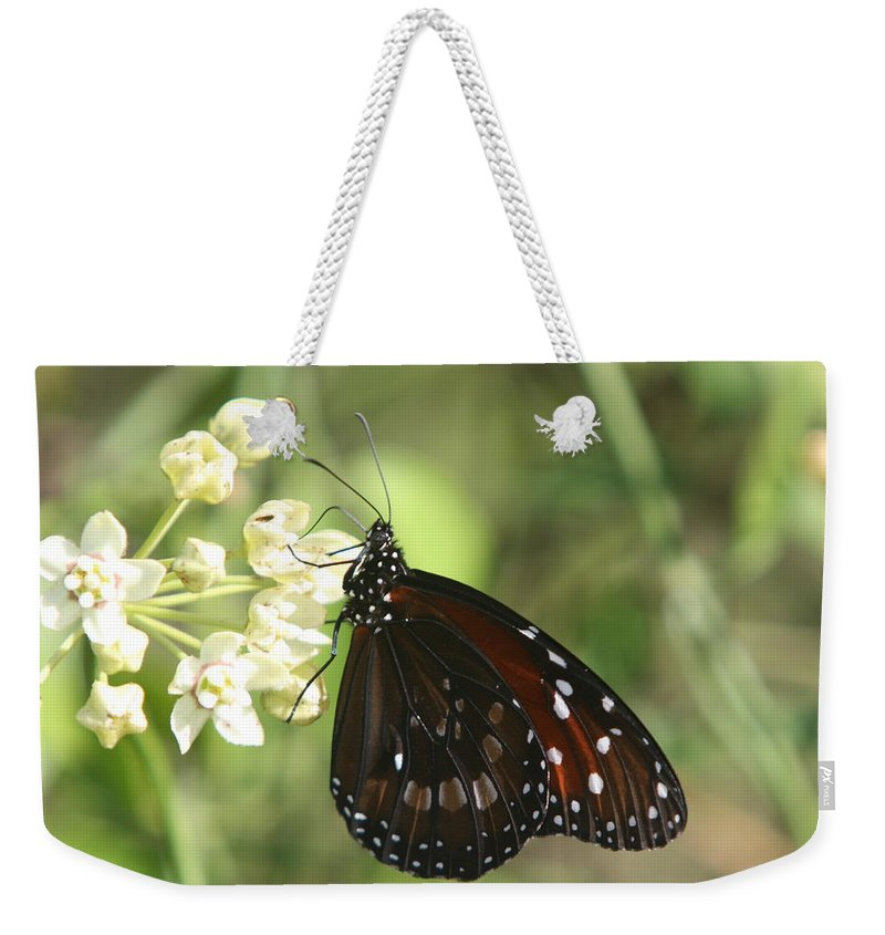 Butterfly Weekender Tote Bag featuring the photograph Monarch Butterfly by Christiane Schulze Art And Photography