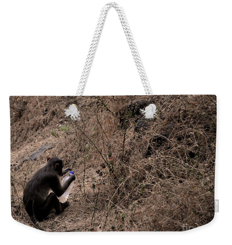 Monkeys Weekender Tote Bag featuring the photograph Monkey See Monkey Do by Matthew Naiden