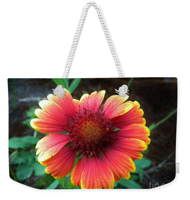 Flower Weekender Tote Bag featuring the photograph Morning Beauty by Matthew Seufer