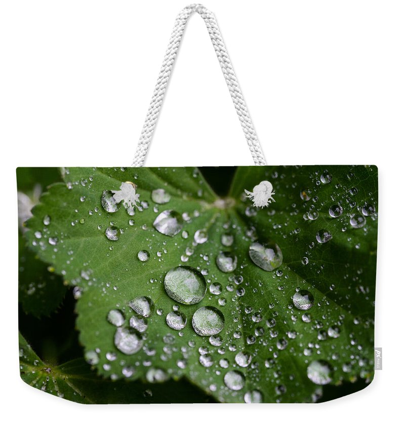 Dew Weekender Tote Bag featuring the photograph Morning Dew by Chevy Fleet