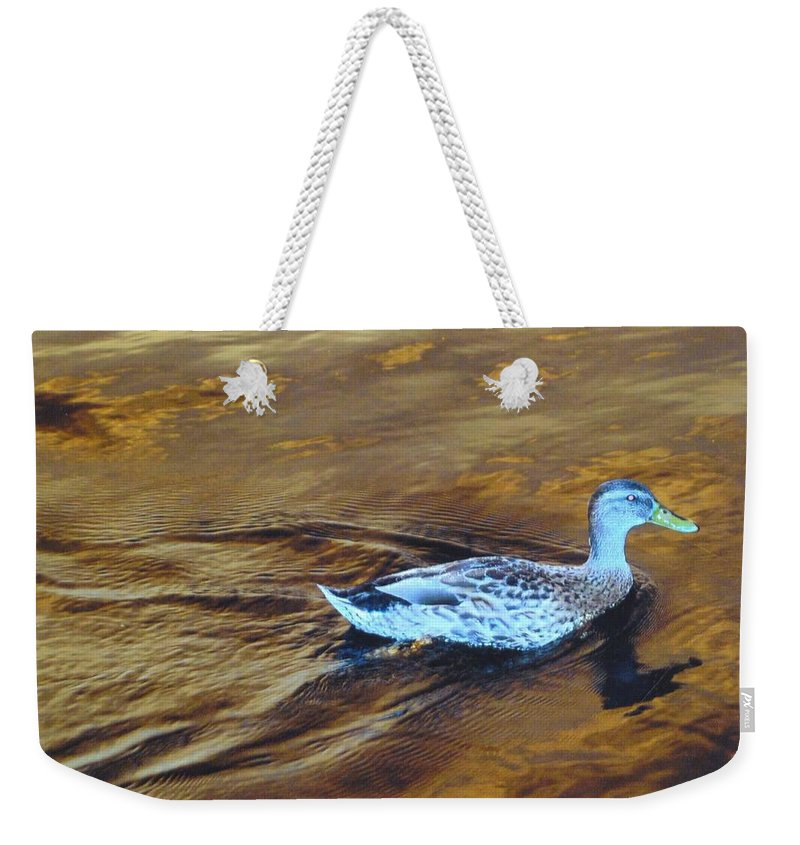 On The Caloosahatchee River Weekender Tote Bag featuring the photograph Mottled Duck by Robert Floyd