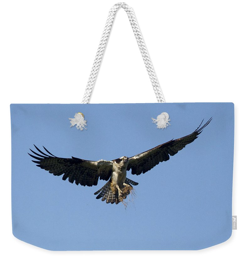 Doug Lloyd Weekender Tote Bag featuring the photograph Nest Material by Doug Lloyd