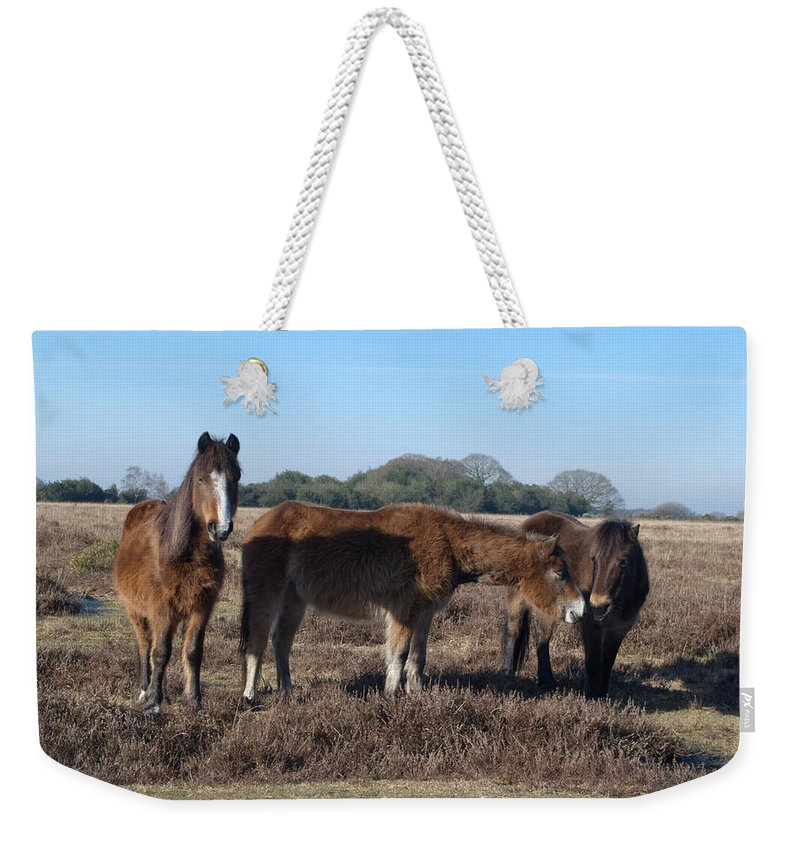 New Forest Pony Weekender Tote Bag featuring the photograph New Forest Ponies by Chris Day