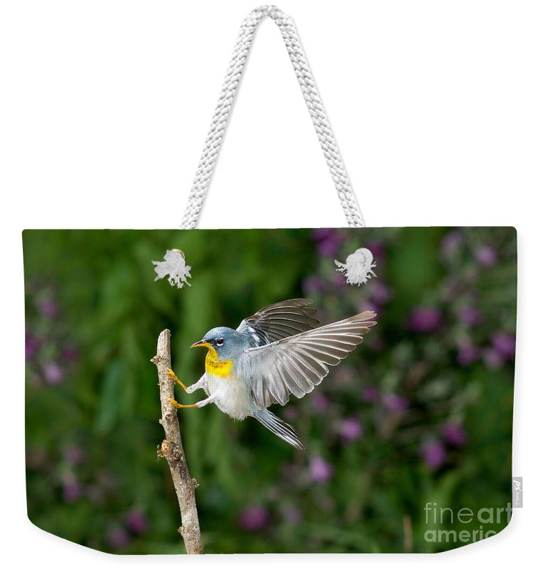 Northern Parula Weekender Tote Bag featuring the photograph Northern Parula Warbler by Anthony Mercieca