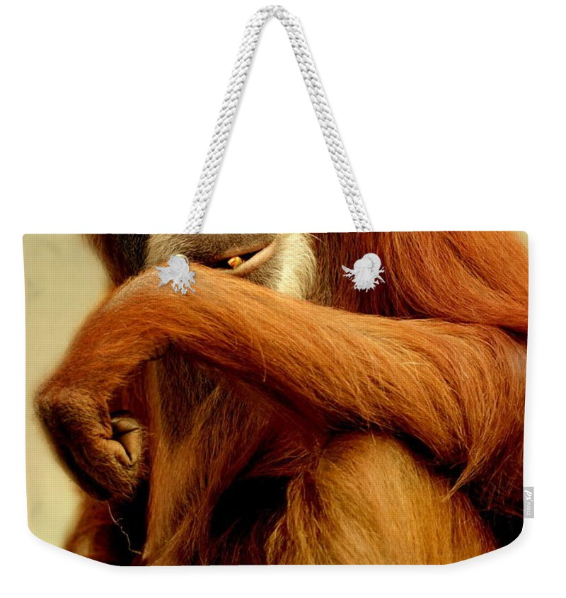 Animal Weekender Tote Bag featuring the photograph Orang Utan by Heike Hultsch