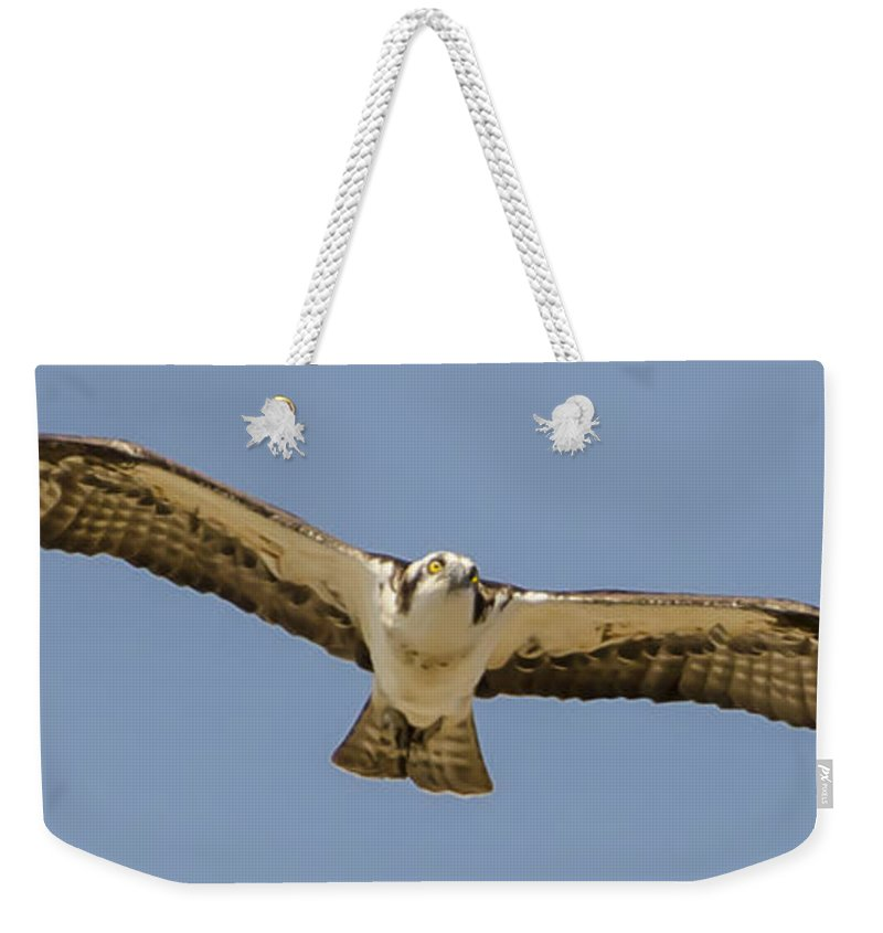Osprey In Flight Weekender Tote Bag featuring the photograph Osprey In Flight by Dale Powell
