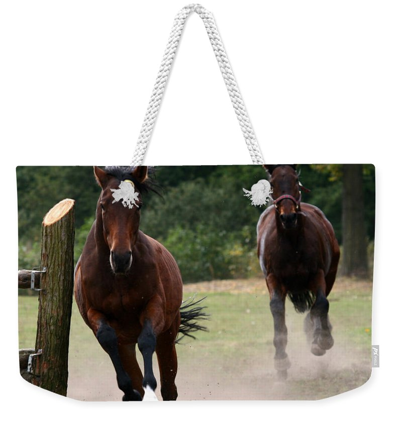 Horse Weekender Tote Bag featuring the photograph Over The Fence by Angel Ciesniarska